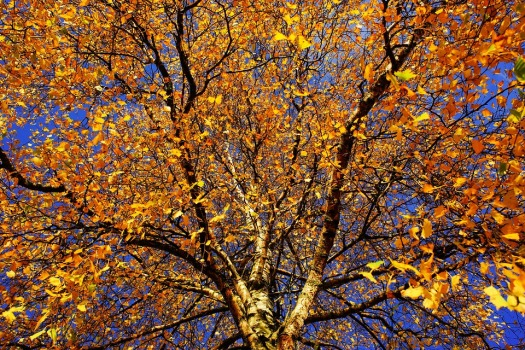 tree-1862633_960_720