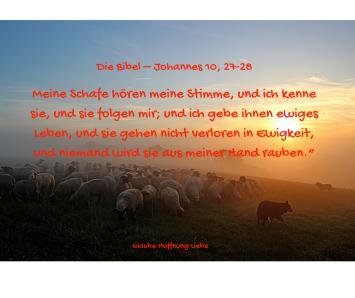 Meine Schafe hören meine Stimme, und ich kenne sie, und sie folgen mir; und ich gebe ihnen ewiges Leben, und sie gehen nicht verloren in Ewigkeit, und niemand wird sie aus meiner Hand r